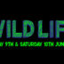 Wildlife Festival 2017 | Brighton Source